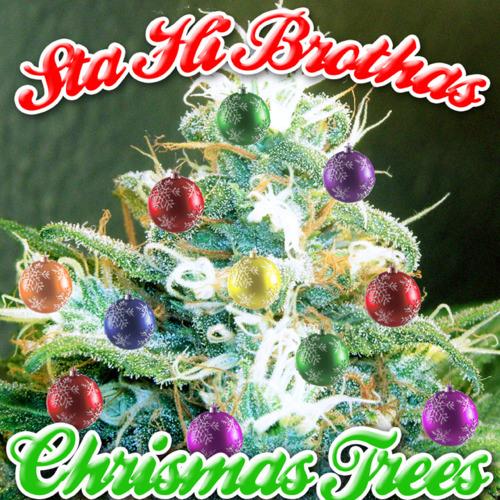 sta-hi-brothers-crismas-trees